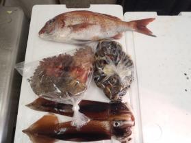 1鮮魚セット2013920