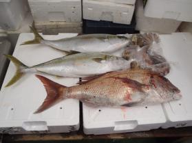 2鮮魚セット2013920
