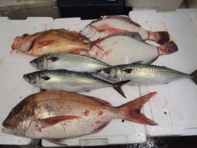 8鮮魚セット2013920