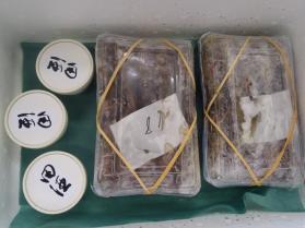 11鮮魚セット2013920