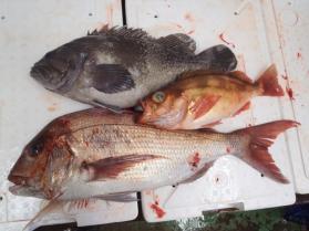 12鮮魚セット2013920