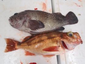 13鮮魚セット2013920