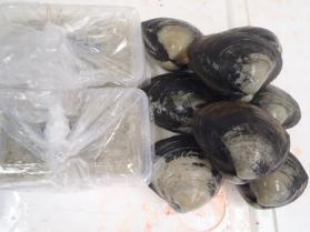 16鮮魚セット2013920