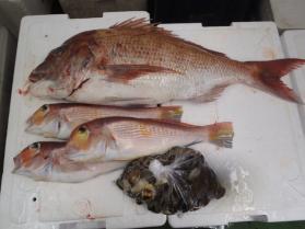 5鮮魚セット2013921