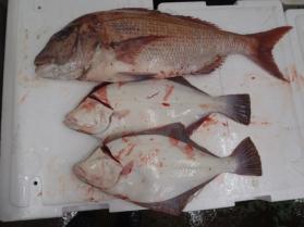 2鮮魚セット2013921