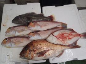 9鮮魚セット2013921