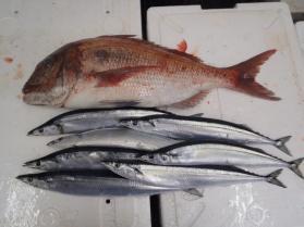 10鮮魚セット2013921