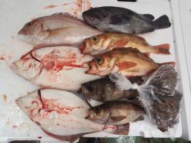 5鮮魚セット2013924