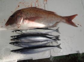 1鮮魚セット2013924