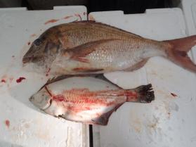 3鮮魚セット2013924