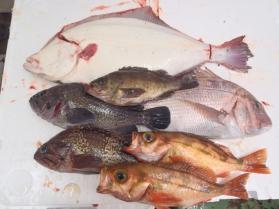 4鮮魚セット2013924
