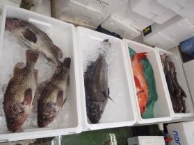 10鮮魚セット2013924