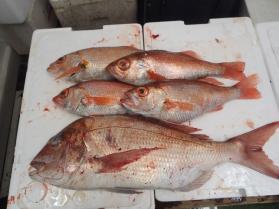 7鮮魚セット2013924