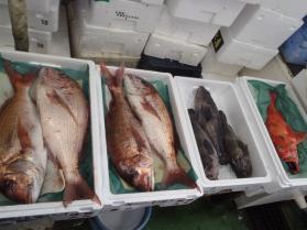 9鮮魚セット2013924