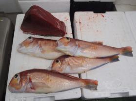 6鮮魚セット2013925