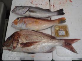 7鮮魚セット2013925