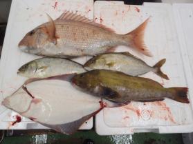 9鮮魚セット2013925