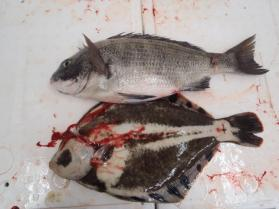 13鮮魚セット2013925