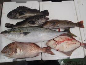 3鮮魚セット2013926