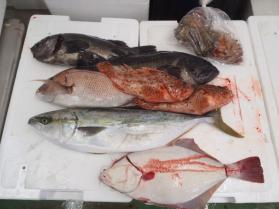 4鮮魚セット2013926