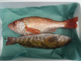 9鮮魚セット2013926