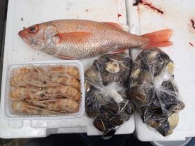 11鮮魚セット2013926