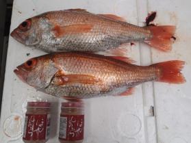 10鮮魚セット2013926