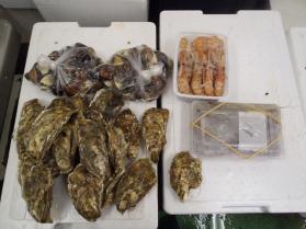 5鮮魚セット2013927