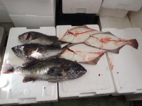 1鮮魚セット2013927