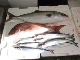 2鮮魚セット2013927