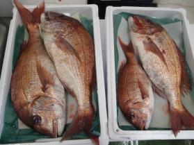 4鮮魚セット2013927