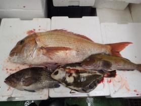 10鮮魚セット2013927