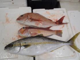 7鮮魚セット2013928