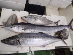 8鮮魚セット2013928