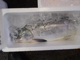 鮭2013930