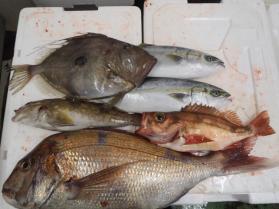 5鮮魚セット2013930