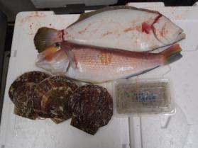 1鮮魚セット2013930