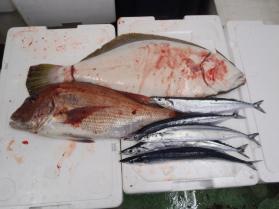 2鮮魚セット2013930