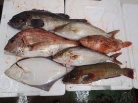 4鮮魚セット2013930