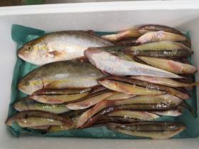 10鮮魚セット2013930