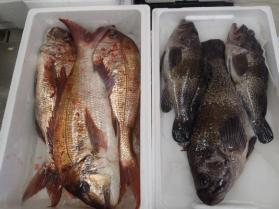 9鮮魚セット2013930