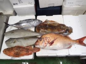 5鮮魚セット20131031