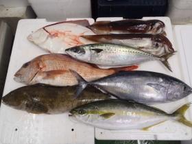 1鮮魚セット20131031