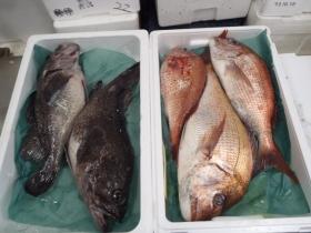 6鮮魚セット20131031