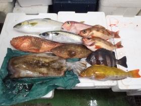 14鮮魚セット20131031