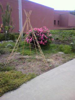 bamboo teepee