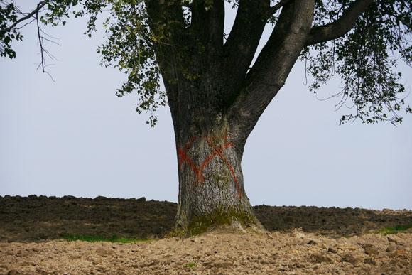 【現地取材】モラルなき観光客に苦悩する農家! 苦肉の策で観光スポット『哲学の木』にペンキで×印を描く | ロケットニュース24