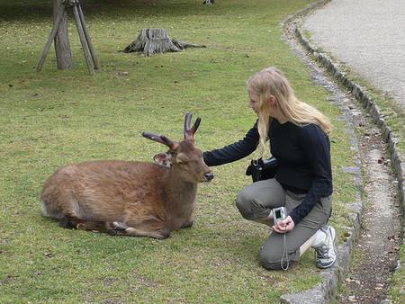 「おい信じられるか、日本の鹿は信号待ちするんだ!」感心しきりの外国人たち:らばQ