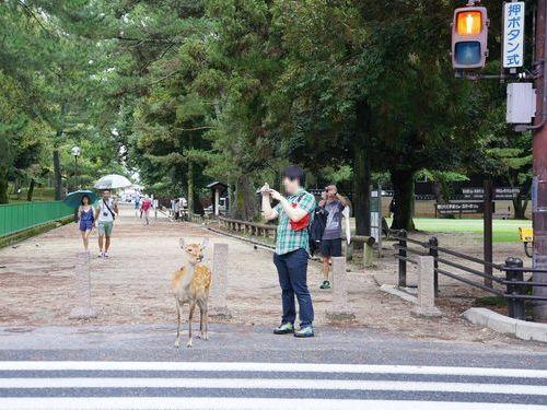 奈良と言えば鹿が身近にいることで有名ですが、古都や大仏など日本の歴史を感じられることから、観光地として外国人にも人気があります。 ある外国人が、「奈良で信号待ちをする鹿を見た!」と海外サイトに投稿し、