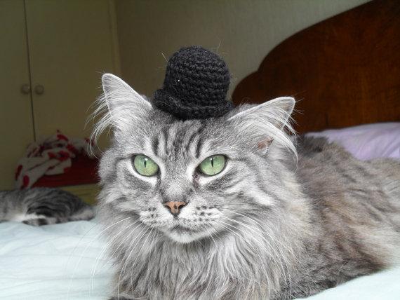 かわいすぎ! ネコの頭にのっける帽子 - ねとらぼ4